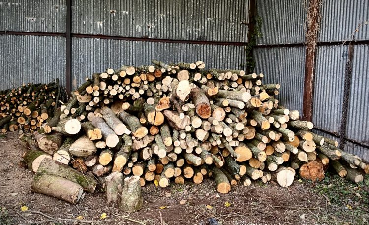 Pile of logs ready to be made into firewood